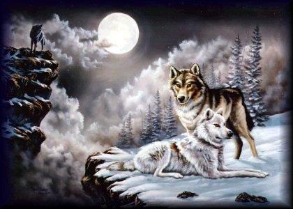 wolf22.jpg
